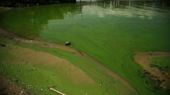 Lake Erie Algal bloom