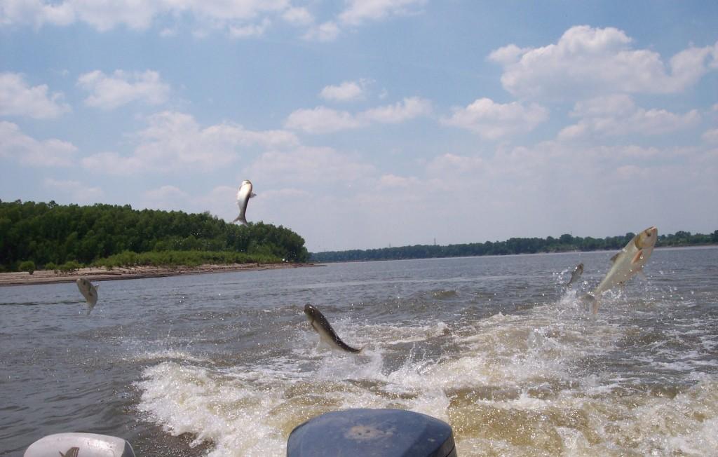 Impact of Asian Carp in Lake Erie