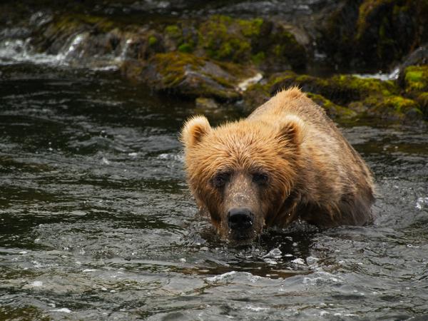 BearWater_LucyBowden_Press1280