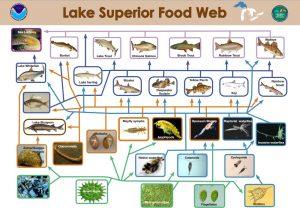 Image by NOAA, Great Lakes Environmental Research Laboratory via wikimedia
