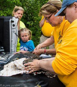 Photos Courtesy of Barb Jensen, Michigan Osprey via John Hartig